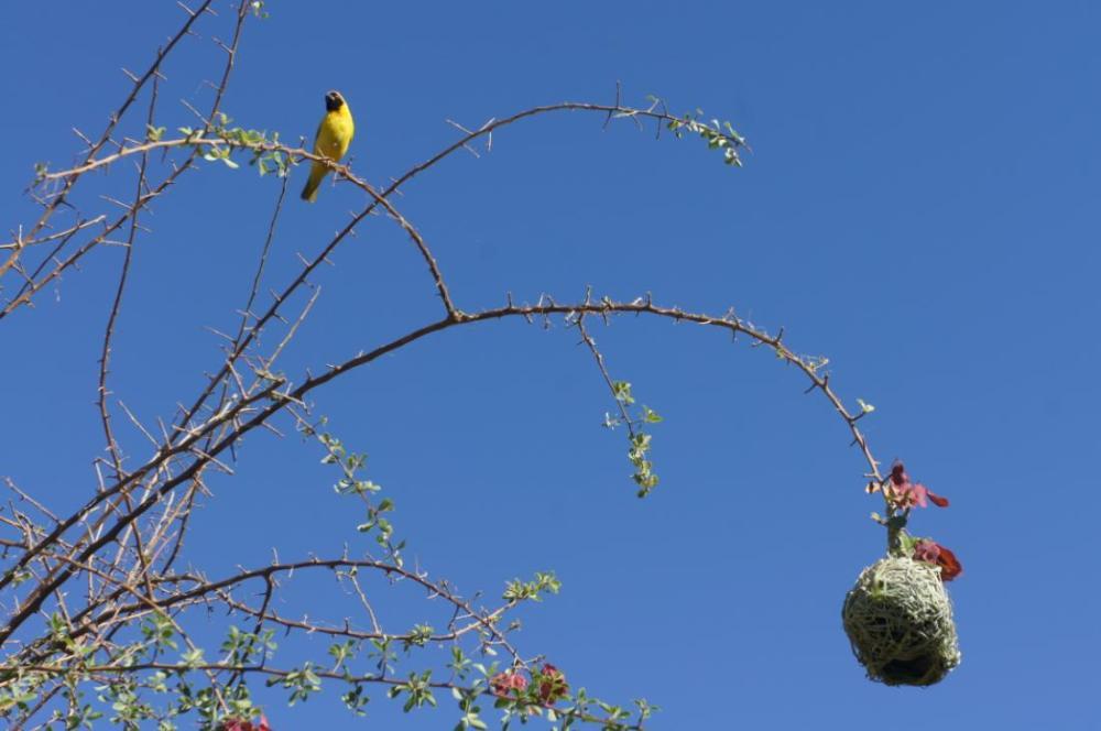 Vögelauf Baum