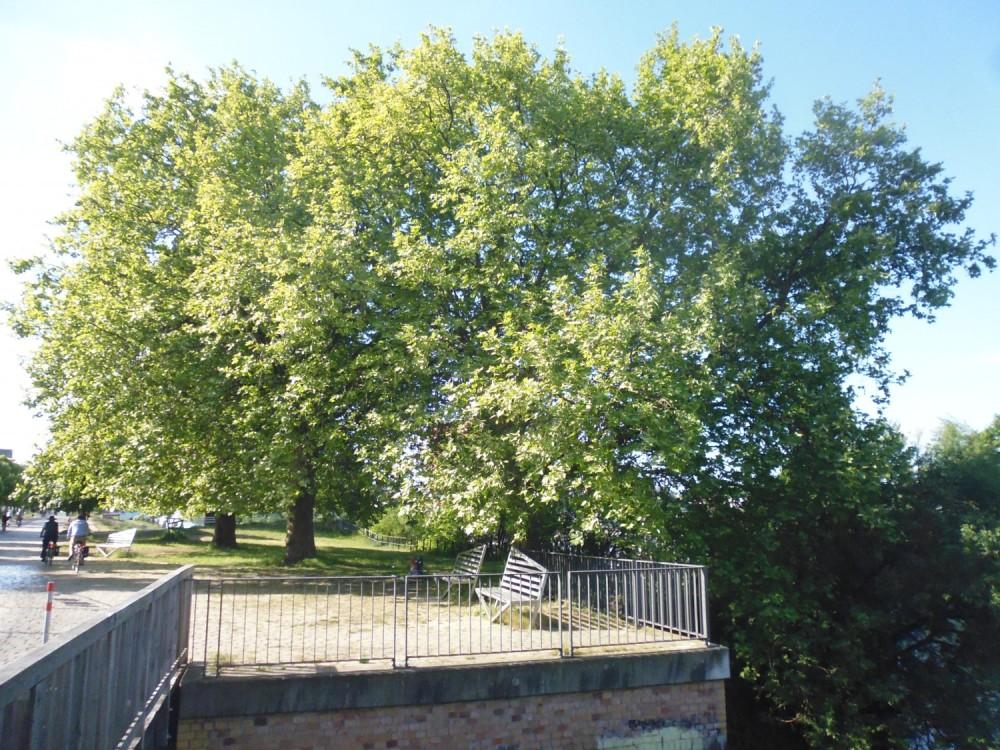 Nach acht Monaten endlich wieder zurück: Mitteleuropäische Laubbäume... wie schön
