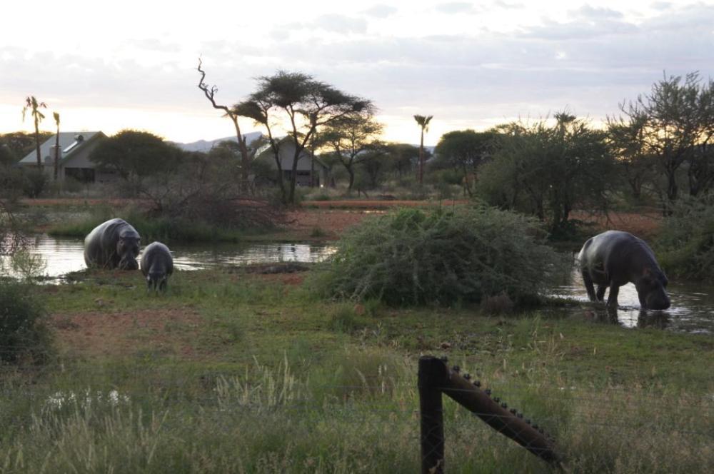 Namibia Elefaanten