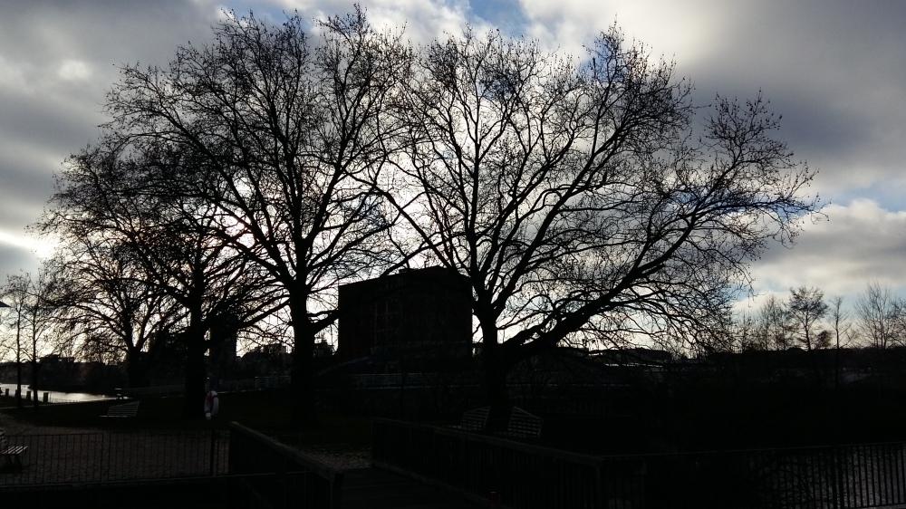 2015_Dez 28 Bäume1