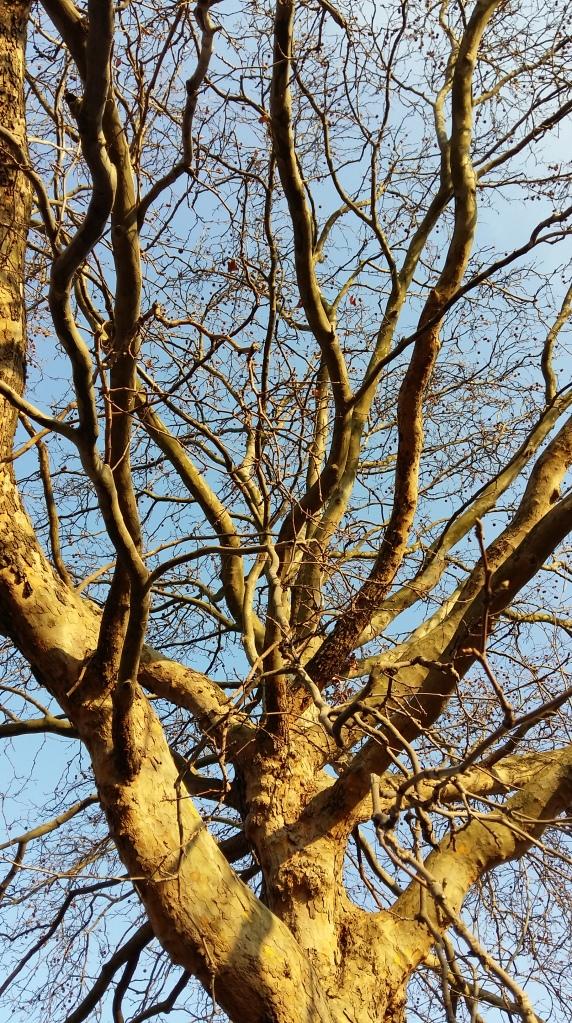 2015_Jan 03 Bäume4