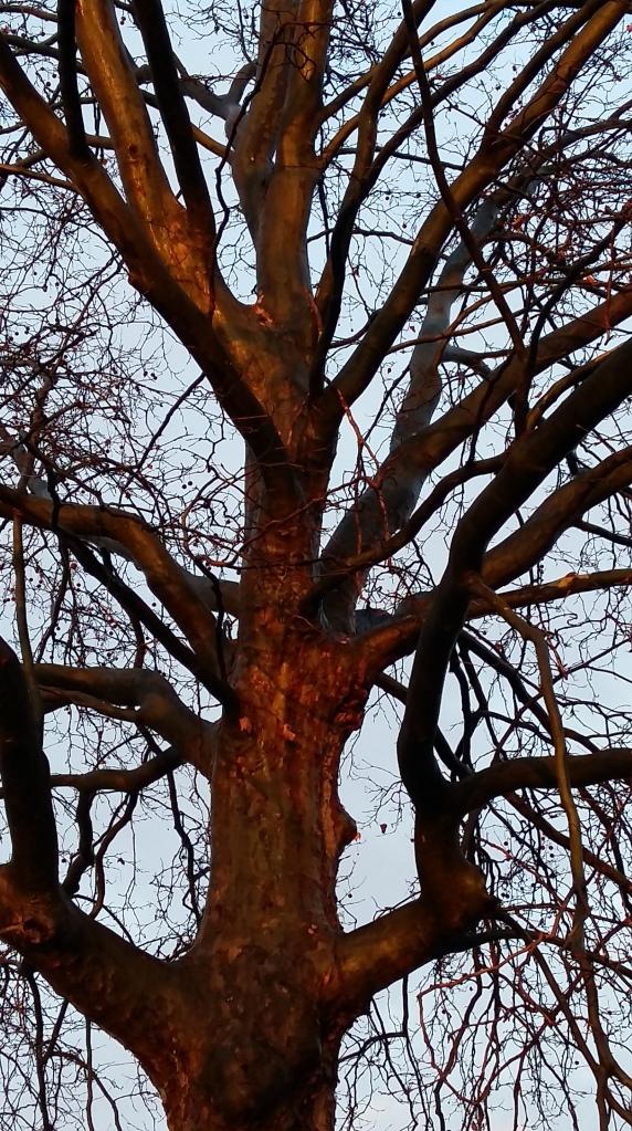 2016__Jan_10 Bäume 2