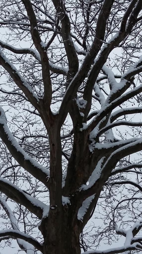 2016__Jan_17 Bäume 4