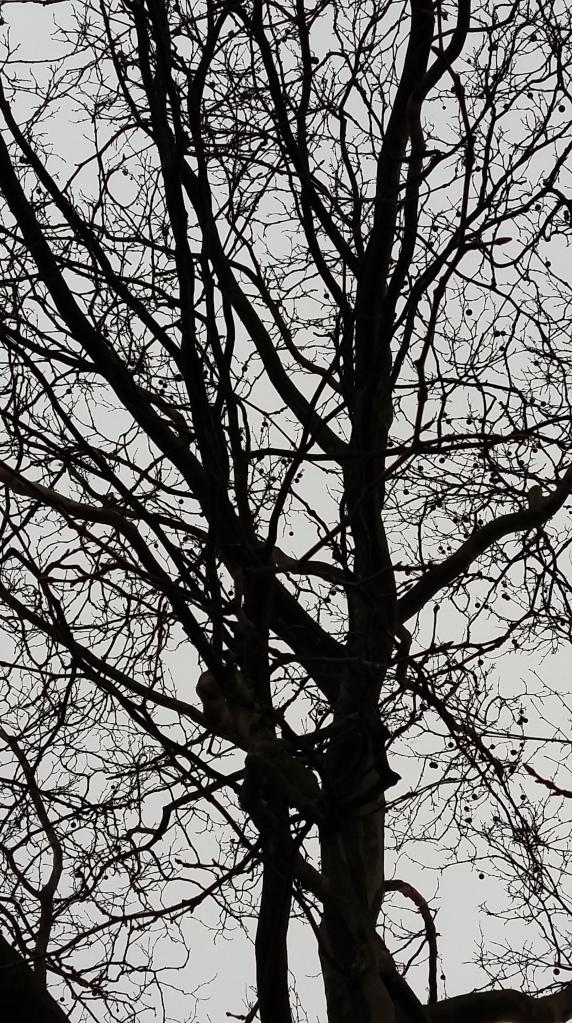 2016__Feb_07 Bäume 4