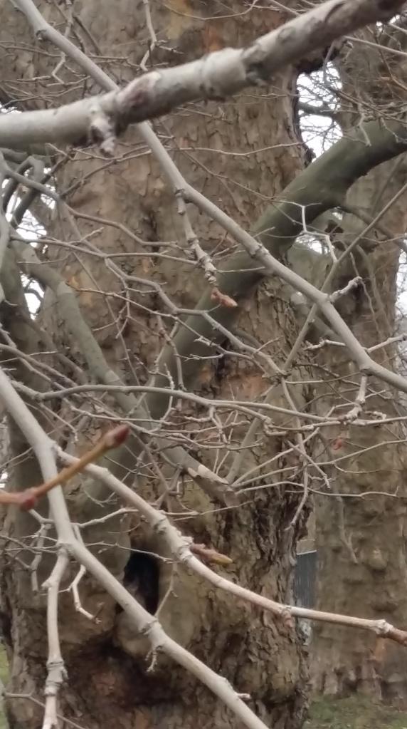 2016__Feb_14 Bäume 1