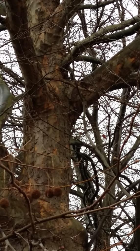 2016__Feb_21 Bäume 4