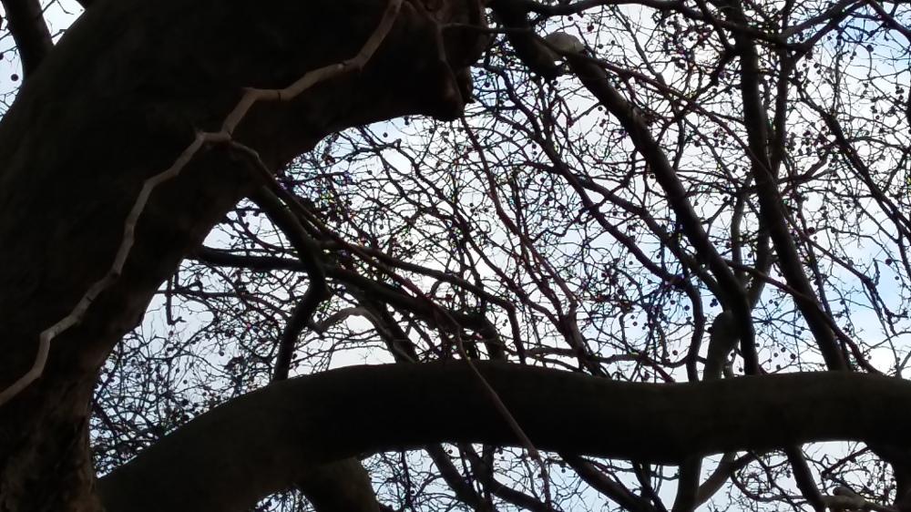 2016__Jan_31 Bäume 4
