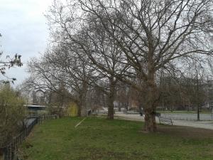 2016__März_ 29 Bäume 1