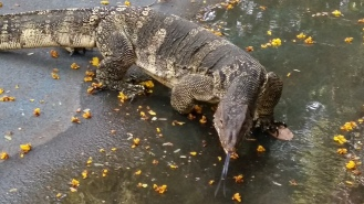 Started at Lumpini Park and cycled West... see you later Alligator.