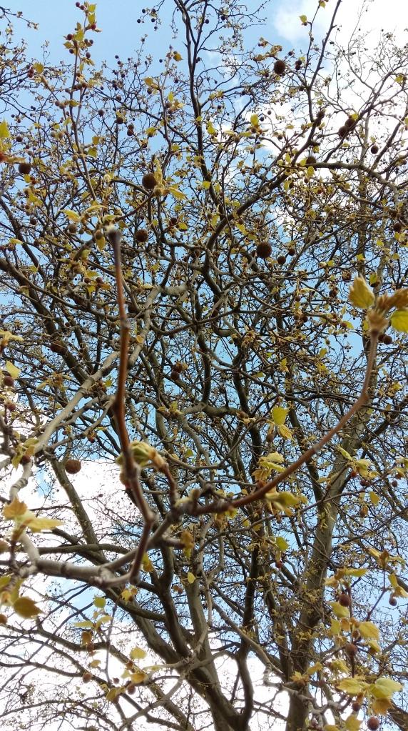 2016_April 24 Bäume4