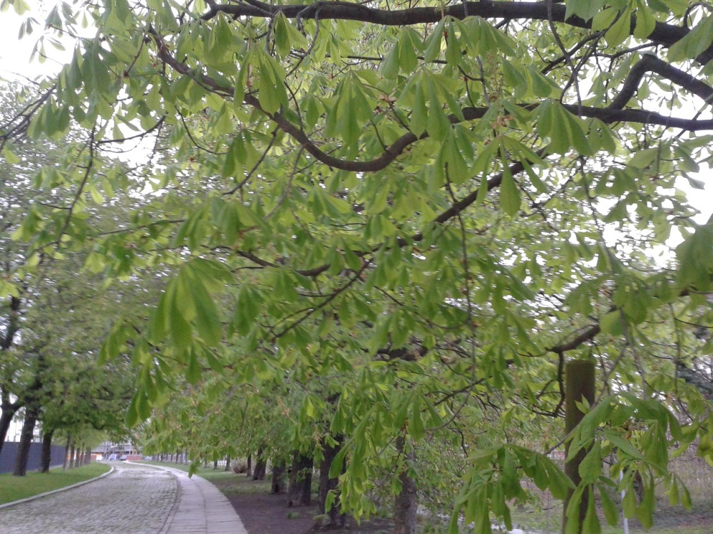 2016_April_ 17 Bäume 5