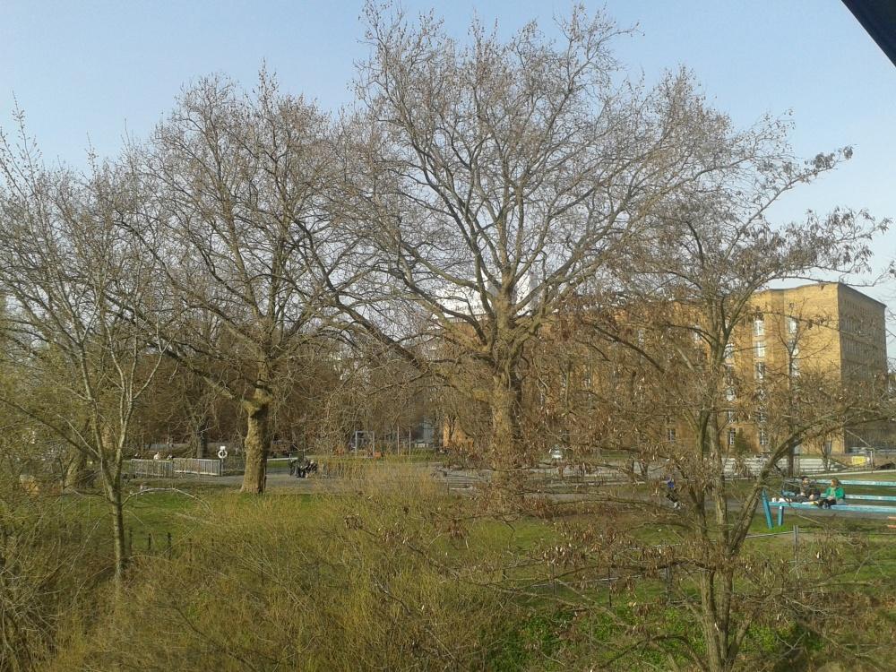2016_April_ 2  Bäume 5
