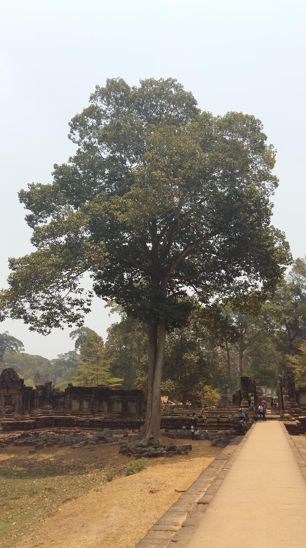 2106_April_12 Bäume 4