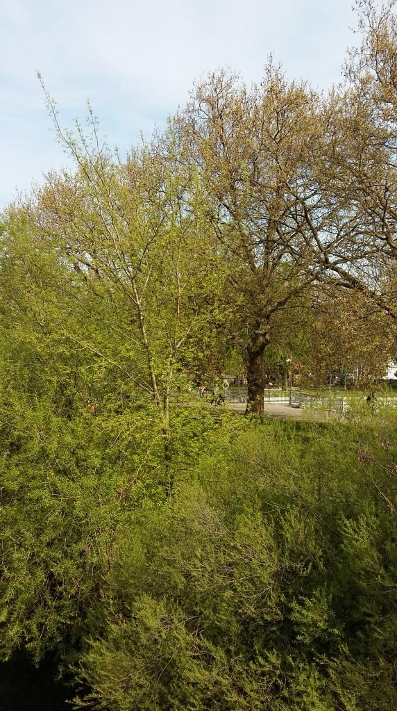 2016_Mai 01 Bäume4