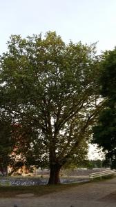 2016_MAi 22 Bäume4