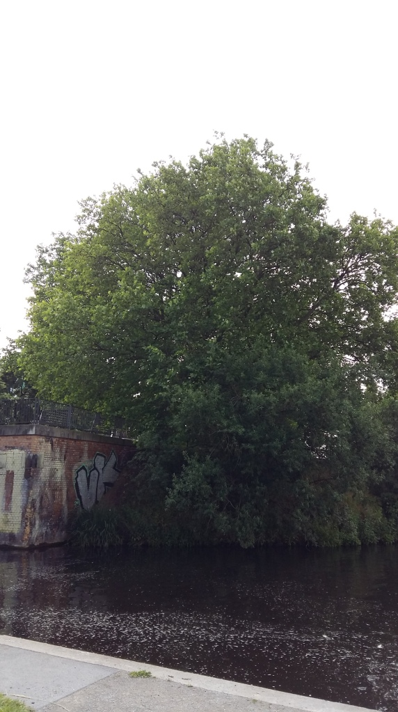 2016__Juni_20 Bäume 4