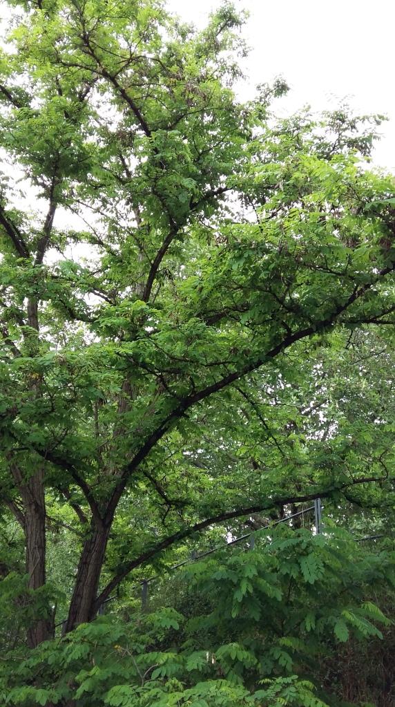 2016_Juni 05 Bäume4
