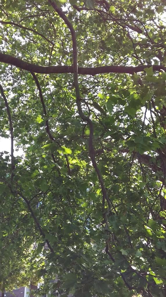 2016_Juni 12 Bäume4