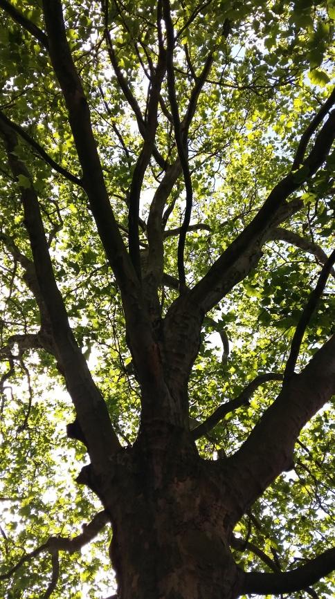 2016_Juli 2_Bäume1