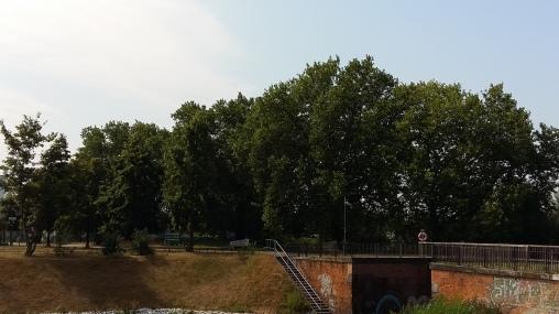2016_Juli 25_Bäume3