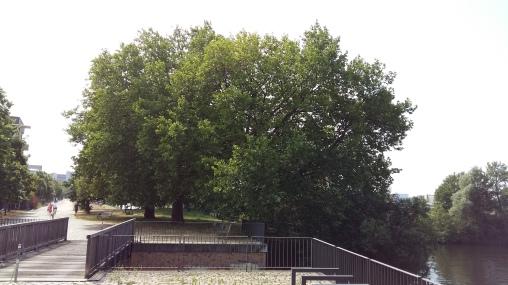 2016_Juli 25_Bäume2