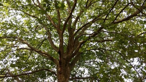 2016_Juli 25_Bäume1