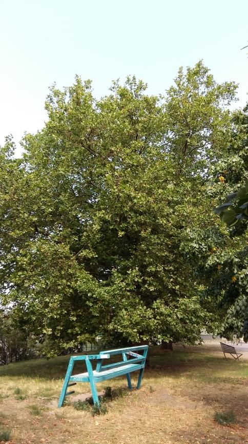 2016_Juli 25_Bäume4