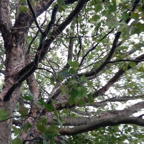 Vier Bäume August 3