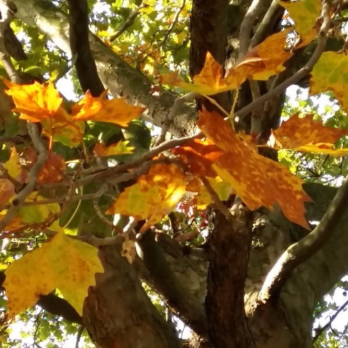 August trees Brown leaf 1