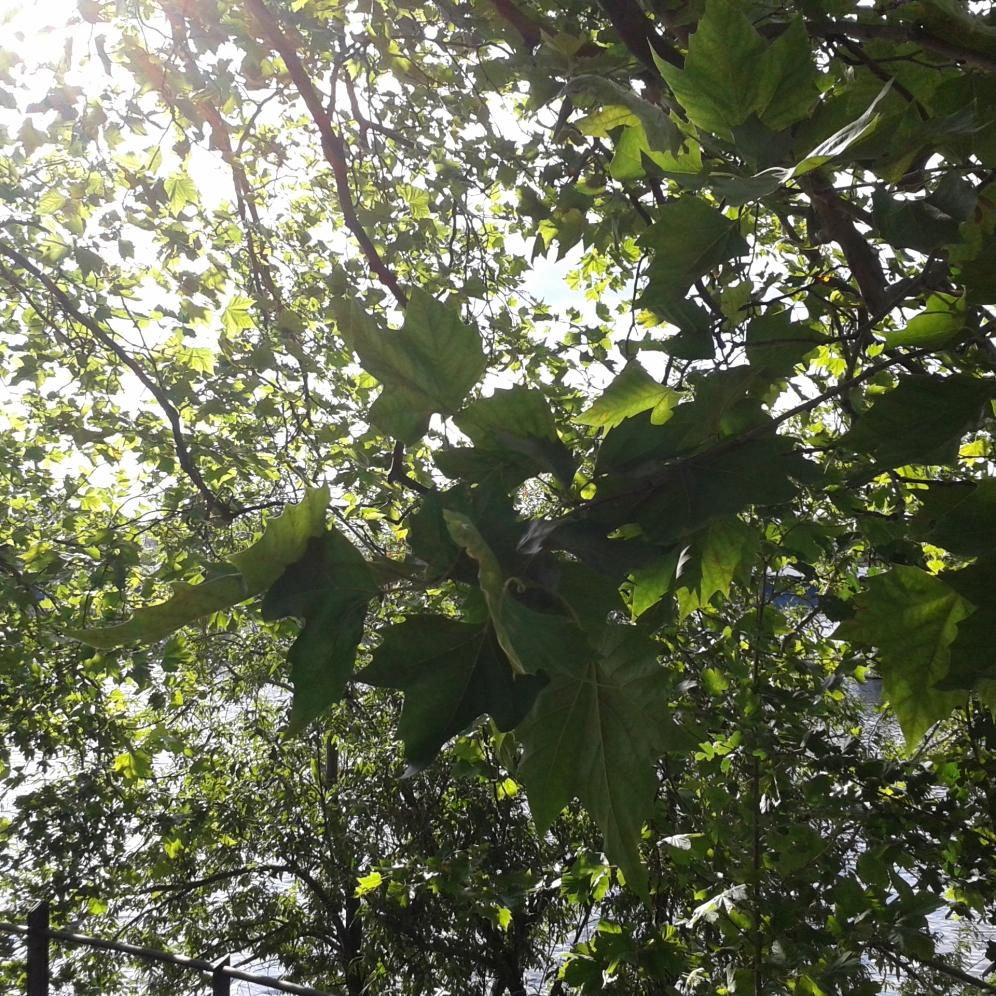 2016_Aug 01 Bäume4