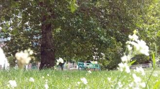2016_Aug 10 Bäume1