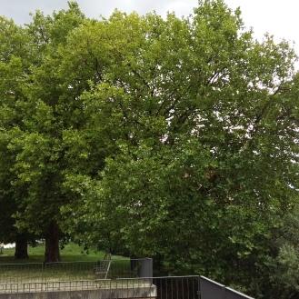 2016_Aug 10 Bäume2