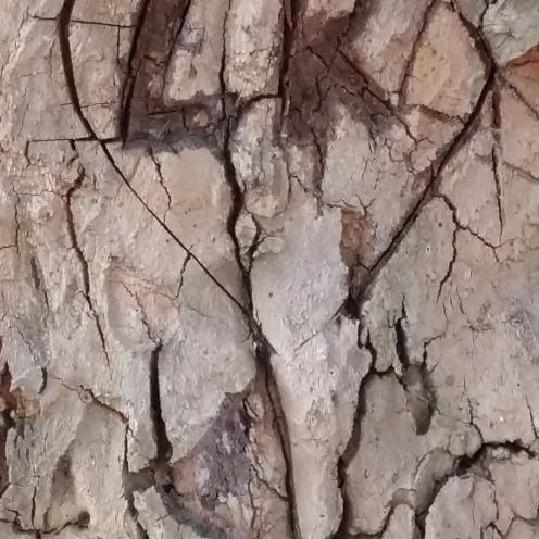 2016_Sept 12 Bäume2
