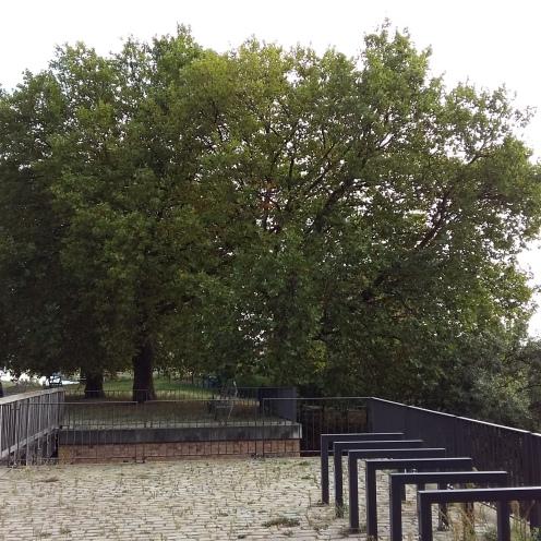 2016_Sept 17 Bäume3