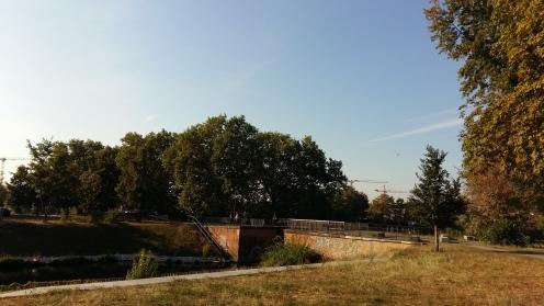 2016_Sept 24 Bäume1