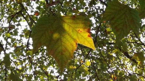 2016_Sept 24 Bäume2
