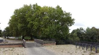 2016_Sept 4 Bäume2