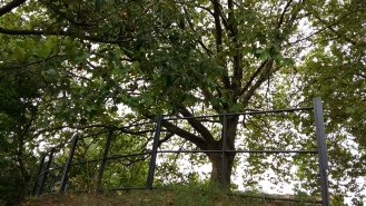 2016_Sept 4 Bäume3