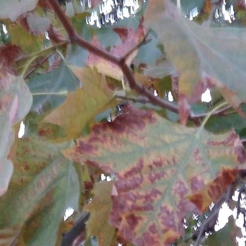 2016_Okt 4 Bäume1
