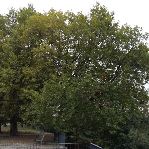 2016_Okt 4 Bäume2
