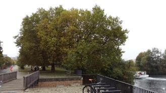 Deutsche Leitkultur, Christian Raum, Bäume am Fluss, Berlin Wedding