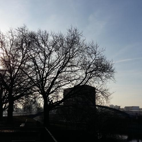 2017_jan_30_baeume1