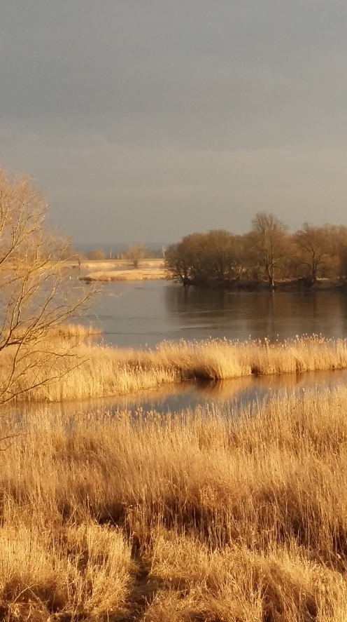 Odra river view