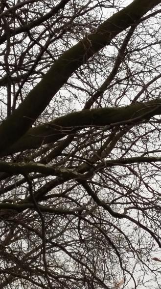 2017_Bäume14 Marz 7