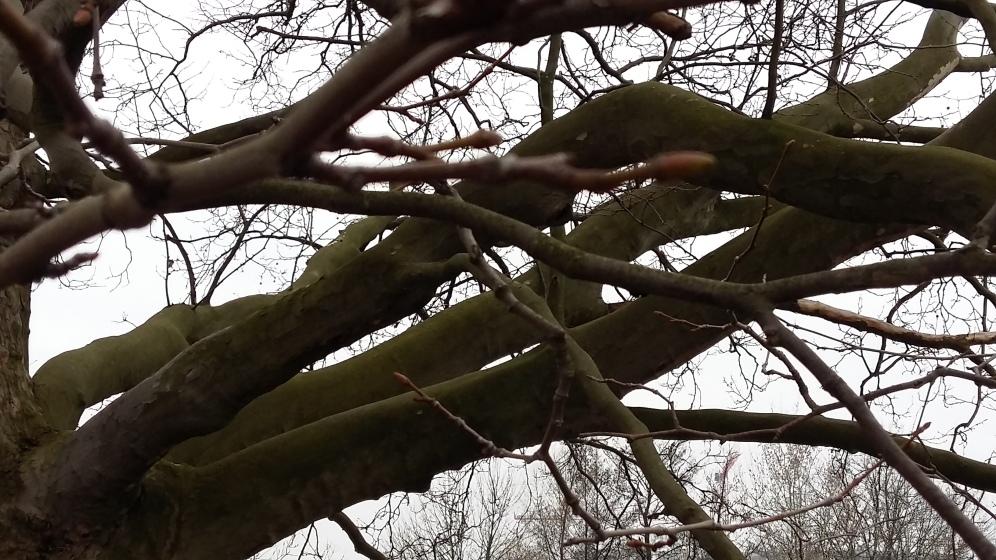 2017_März 14 Bäume1