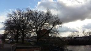 2017_März 20 Bäume1