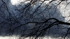 2017_März 20 Bäume4