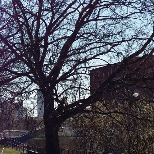 2017_März 27 Bäume1