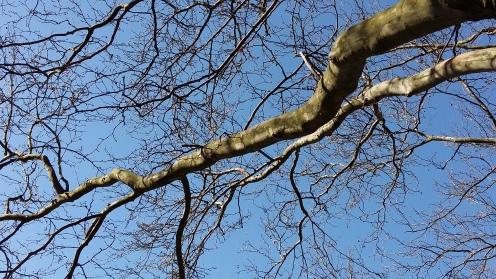 2017_März 27 Bäume2
