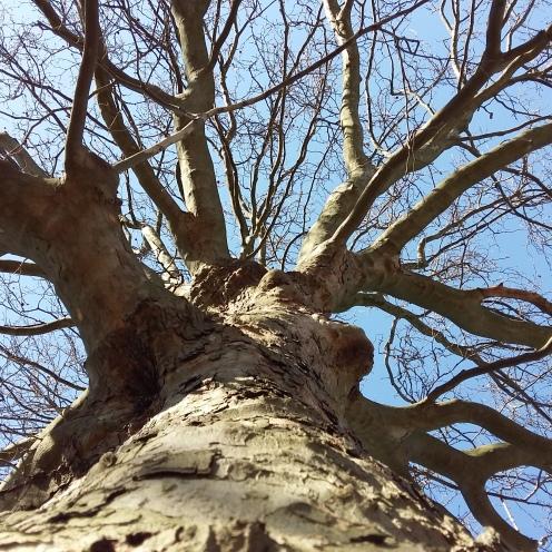 2017_März 27 Bäume3